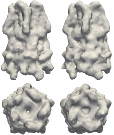 Structures to the left are models of the pentameric ligand-gated ion channel (pLGIC), which mediate fast synaptic communication by converting chemical signals into an electrical response. The structures on the right are reconstructions of pLGIC from FXS data using M-TIP. (Image Credit: Jeffrey J. Donatelli, Berkeley Lab)