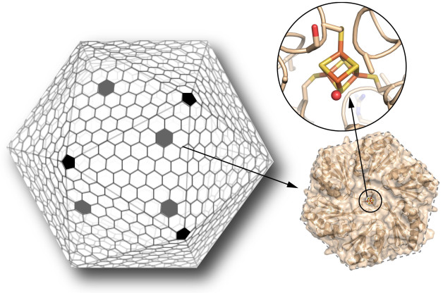 The shell of a bacterial microcompartment (or BMC) is mainly composed of hexagonal proteins, with pentagonal proteins capping the vertices, similar to a soccer ball (left). Scientists have engineered one of these hexagonal proteins, normally devoid of any metal center, to bind an iron-sulfur cluster (orange and yellow sticks, upper right). This cluster can serve as an electron relay to transfer electrons across the shell. Introducing this new functionality in the shell of a BMC greatly expands their possibilities as custom-made bio-nanoreactors. (Credit: Clément Aussignargues/MSU, Cheryl Kerfeld and Markus Sutter/Berkeley Lab)