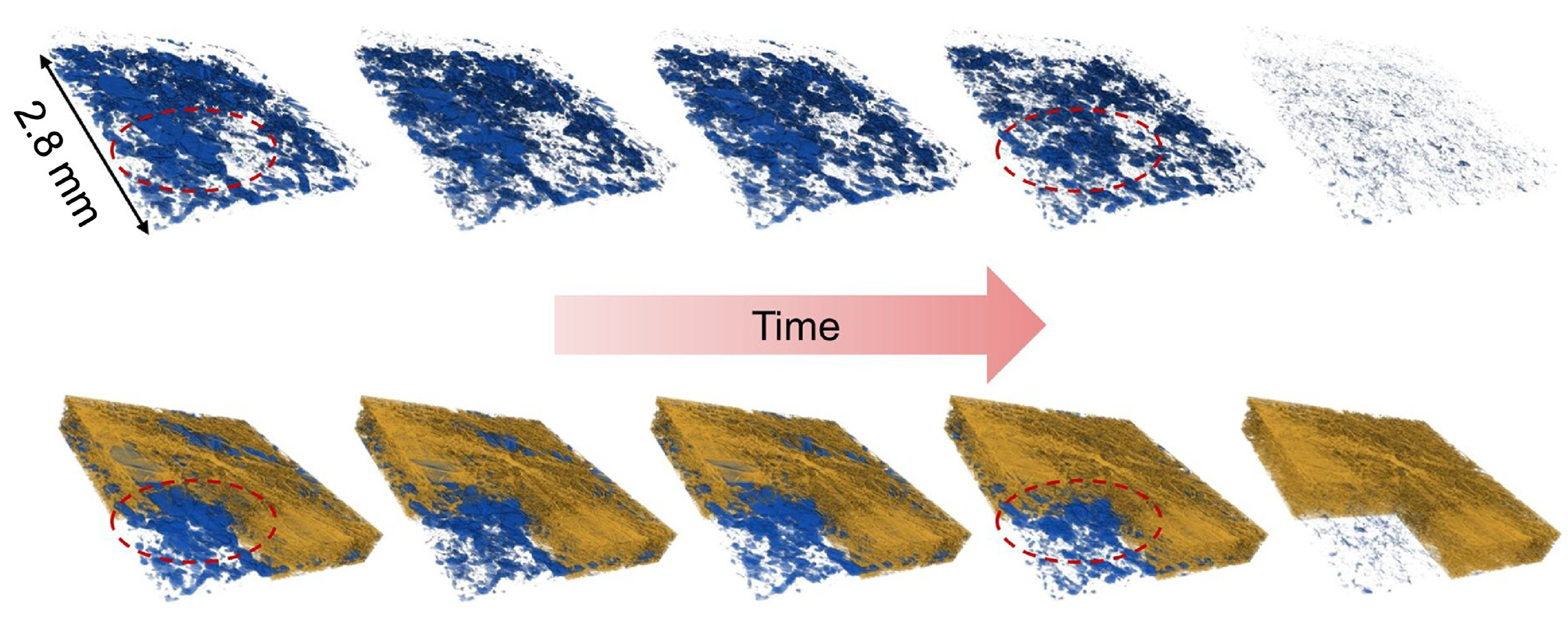 Image - Water clusters in sample fuel-cell components shrink over time in this sequence of images, produced by a 3-D imaging technique known as micro X-ray computed tomography. The water clusters were contained in a fibrous membrane that was exposed to different temperatures. The mean temperature began at about 104 degrees Fahrenheit and was gradually increased to about 131 degrees Fahrenheit. The top side of the images was the hotter side of the sample, and the bottom of the images was the colder side. (Credit: Berkeley Lab)